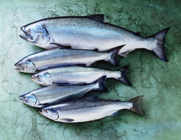 alaska-salmon