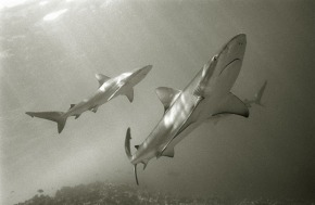 Help Stop Shark Finning : Humane Society International